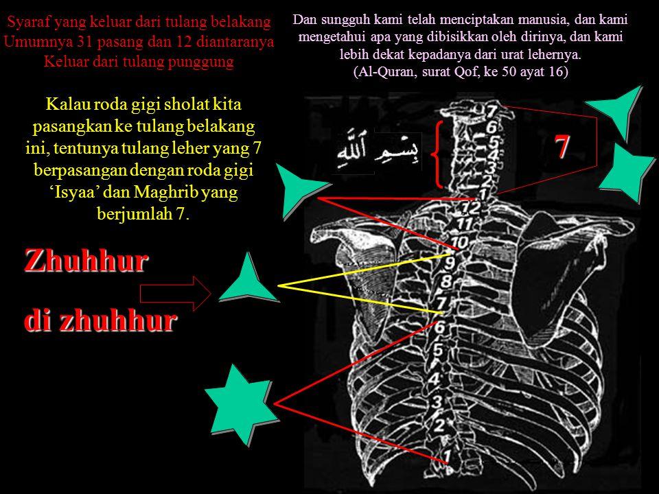 Kalau roda gigi sholat kita pasangkan ke tulang belakang ini, tentunya tulang leher yang 7 berpasangan dengan roda gigi 'Isyaa' dan Maghrib yang berjumlah 7.