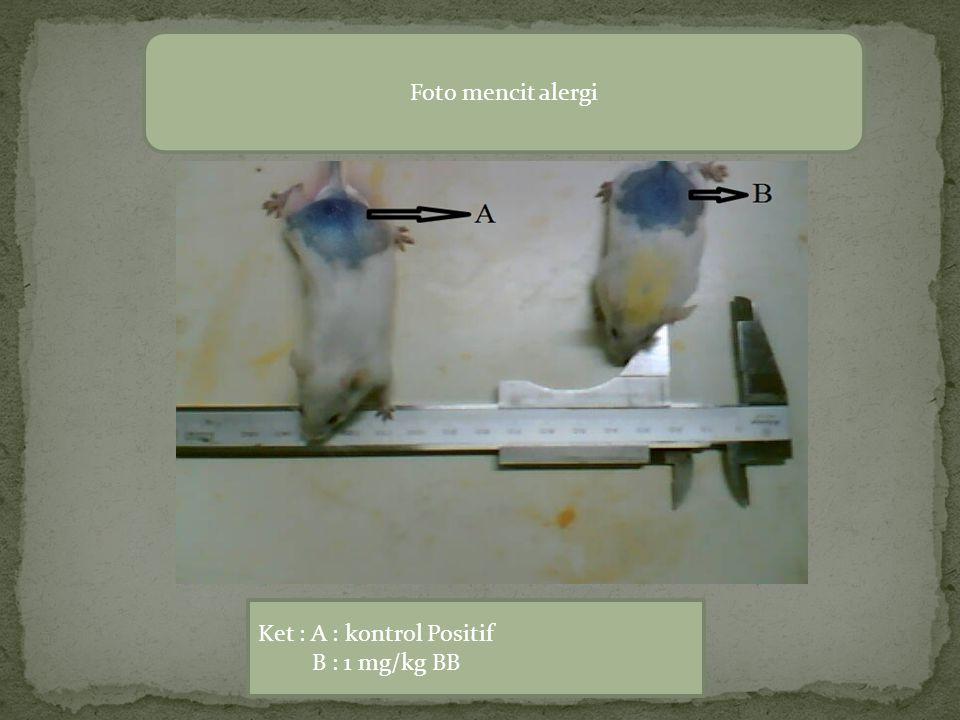 Foto mencit alergi Ket : A : kontrol Positif B : 1 mg/kg BB
