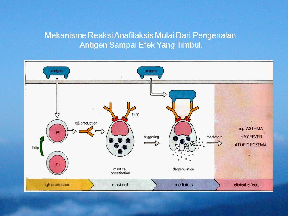Mekanisme Reaksi Anafilaksis Mulai Dari Pengenalan Antigen Sampai Efek Yang Timbul.