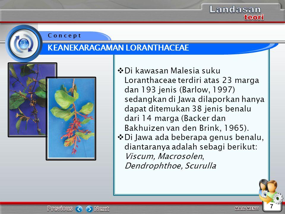  Di kawasan Malesia suku Loranthaceae terdiri atas 23 marga dan 193 jenis (Barlow, 1997) sedangkan di Jawa dilaporkan hanya dapat ditemukan 38 jenis benalu dari 14 marga (Backer dan Bakhuizen van den Brink, 1965).