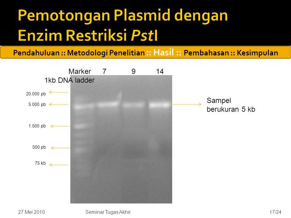 27 Mei 201017/24 Marker 79 14 1kb DNA ladder 20.000 pb 5.000 pb 1.500 pb 500 pb 75 kb Sampel berukuran 5 kb Seminar Tugas Akhir Pendahuluan :: Metodologi Penelitian :: Hasil :: Pembahasan :: Kesimpulan