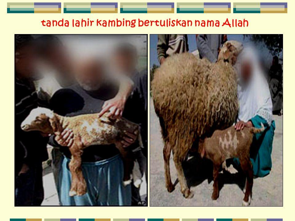 tanda lahir kambing bertuliskan nama Allah