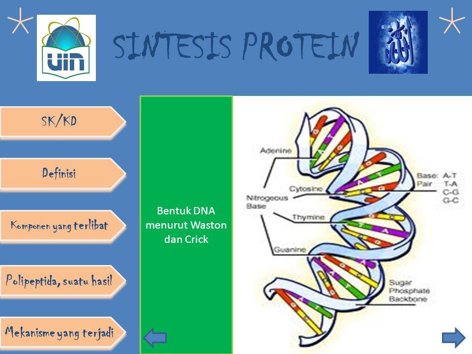 SINTESIS PROTEIN 1. DNA 2. RNA 3 Ribosom SK/KD Definisi Komponen yang terlibat Polipeptida, suatu hasil Mekanisme yang terjadi Pelaksana sintesis prot