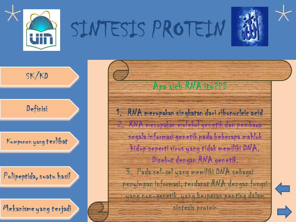 SINTESIS PROTEIN SK/KD Definisi Komponen yang terlibat Polipeptida, suatu hasil Mekanisme yang terjadi DNA tersusun atas: 1.