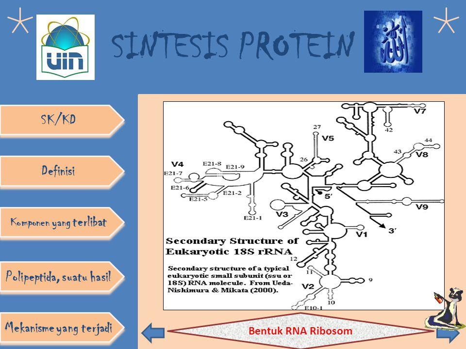 SINTESIS PROTEIN SK/KD Definisi Komponen yang terlibat Polipeptida, suatu hasil Mekanisme yang terjadi
