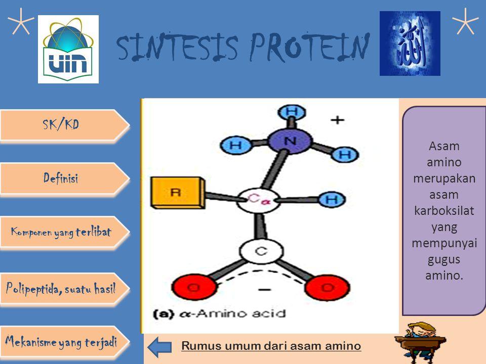 SINTESIS PROTEIN SK/KD Mekanisme yang terjadi Polipeptida, suatu hasil Definisi Komponen yang terlibat Polipeptida merupakan nama lain dari protein tersusun atas asam amino-asam amino yang terhubung satu sama lain dengan ikatan peptida membentuk diri seperti rantai.