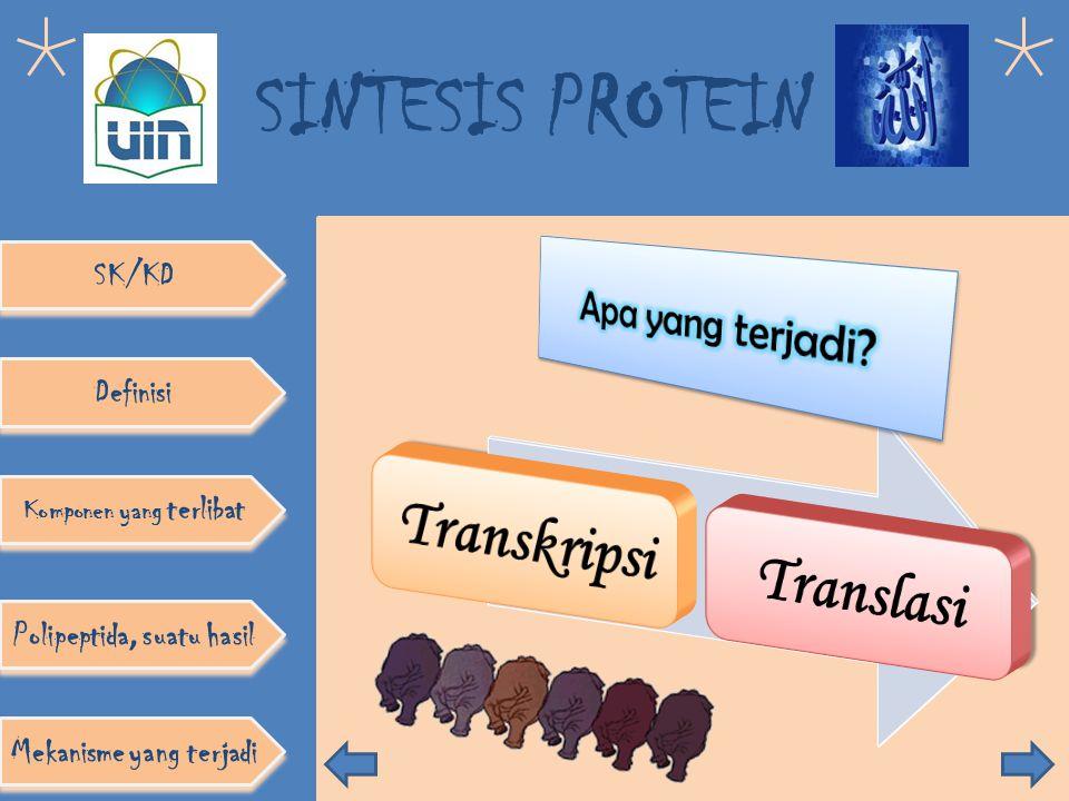SINTESIS PROTEIN Definisi Komponen yang terlibat SK/KD Polipeptida, suatu hasil Mekanisme yang terjadi Fungsi Polipeptida: Fungsi polipeptida Pembentu
