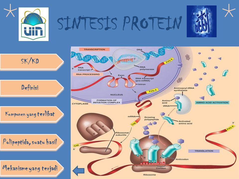 SINTESIS PROTEIN Definisi Komponen yang terlibat Polipeptida, suatu hasil SK/KD Mekanisme yang terjadi