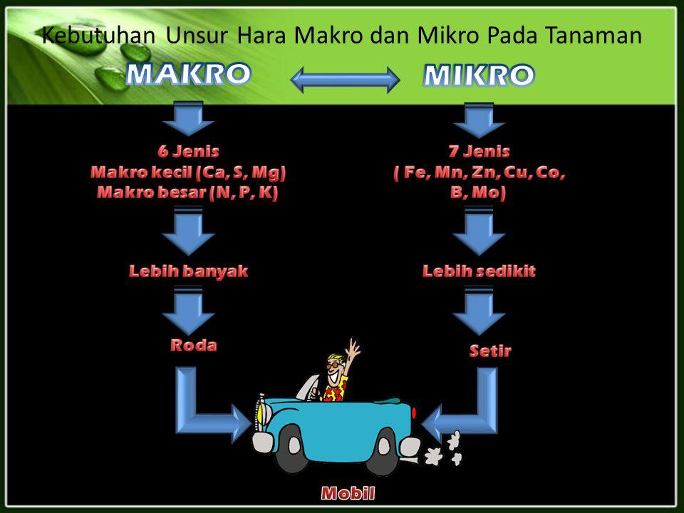 Kebutuhan Unsur Hara Makro dan Mikro Pada Tanaman