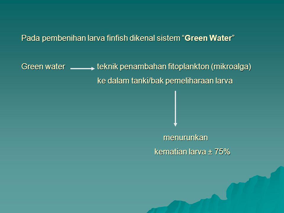 """Pada pembenihan larva finfish dikenal sistem """"Green Water"""" Green water teknik penambahan fitoplankton (mikroalga) ke dalam tanki/bak pemeliharaan larv"""