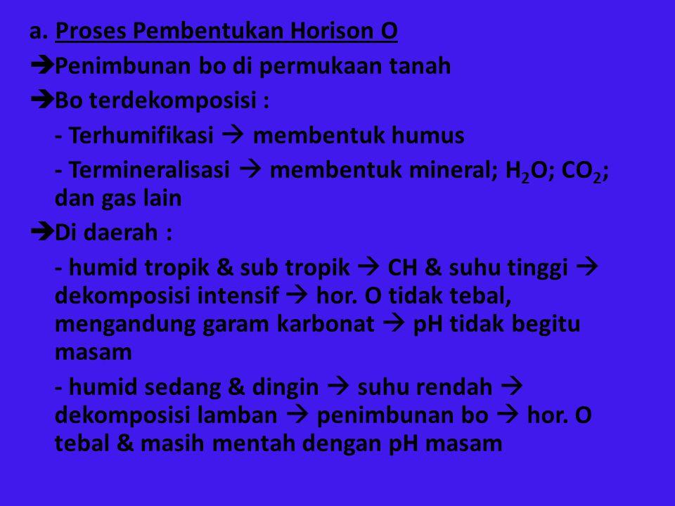 a. Proses Pembentukan Horison O  Penimbunan bo di permukaan tanah  Bo terdekomposisi : - Terhumifikasi  membentuk humus - Termineralisasi  membent