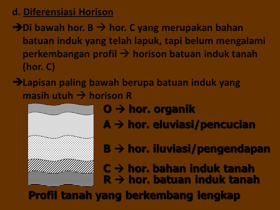 d. Diferensiasi Horison  Di bawah hor. B  hor. C yang merupakan bahan batuan induk yang telah lapuk, tapi belum mengalami perkembangan profil  hori