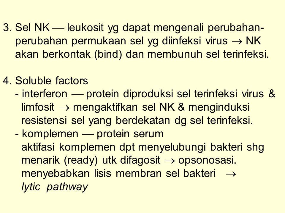 3. Sel NK  leukosit yg dapat mengenali perubahan- perubahan permukaan sel yg diinfeksi virus  NK akan berkontak (bind) dan membunuh sel terinfeksi.
