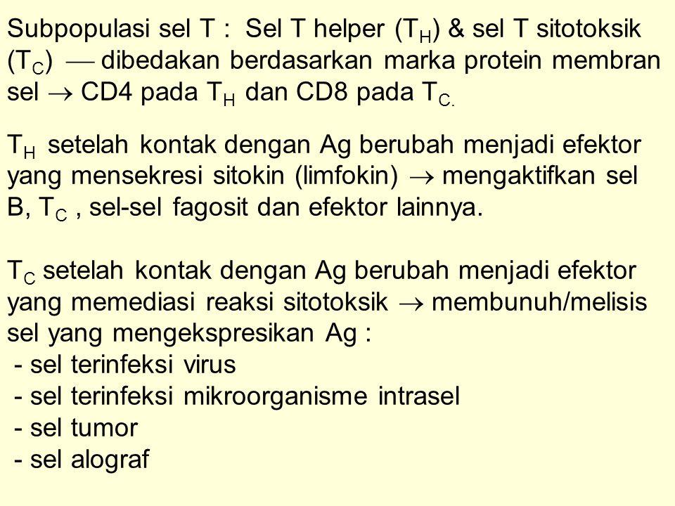Subpopulasi sel T : Sel T helper (T H ) & sel T sitotoksik (T C )  dibedakan berdasarkan marka protein membran sel  CD4 pada T H dan CD8 pada T C. T