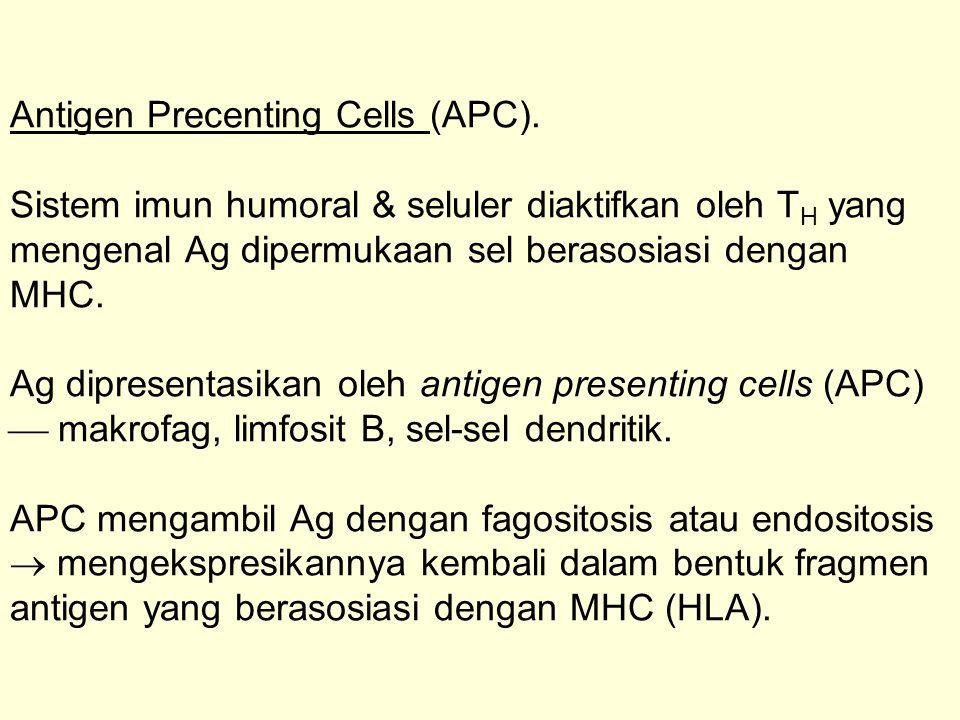 Antigen Precenting Cells (APC). Sistem imun humoral & seluler diaktifkan oleh T H yang mengenal Ag dipermukaan sel berasosiasi dengan MHC. Ag dipresen