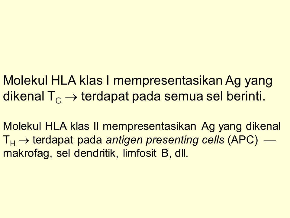 Molekul HLA klas I mempresentasikan Ag yang dikenal T C  terdapat pada semua sel berinti. Molekul HLA klas II mempresentasikan Ag yang dikenal T H 