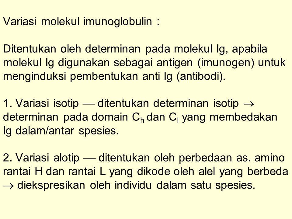 Variasi molekul imunoglobulin : Ditentukan oleh determinan pada molekul Ig, apabila molekul Ig digunakan sebagai antigen (imunogen) untuk menginduksi