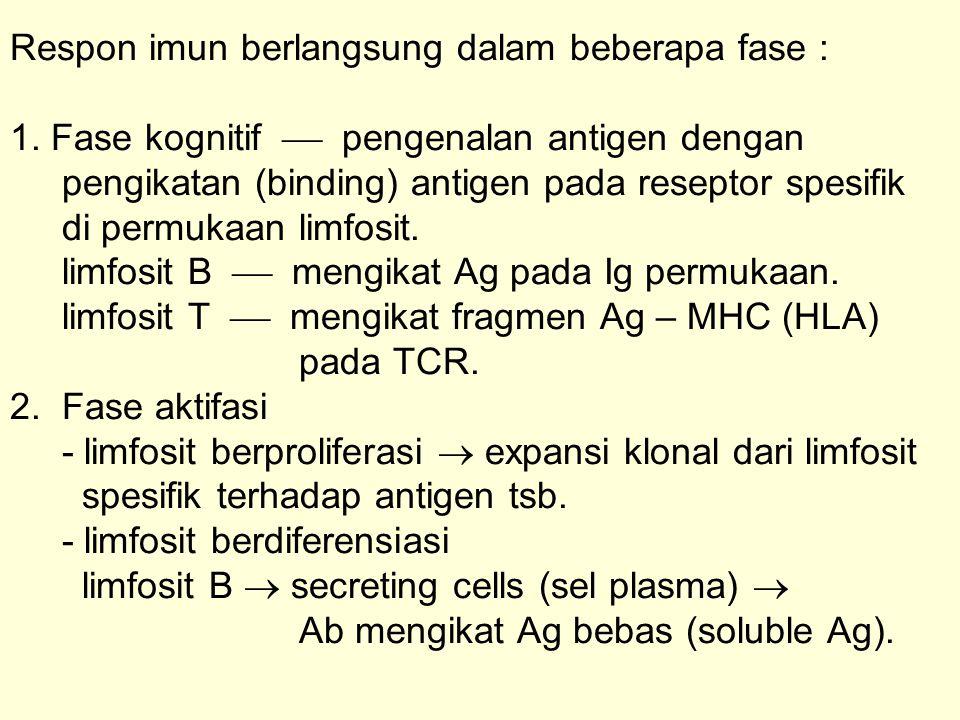Respon imun berlangsung dalam beberapa fase : 1. Fase kognitif  pengenalan antigen dengan pengikatan (binding) antigen pada reseptor spesifik di perm