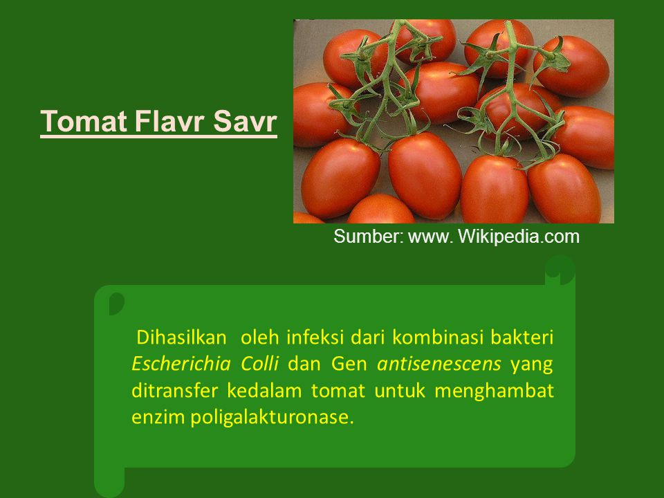 Tomat Flavr Savr Dihasilkan oleh infeksi dari kombinasi bakteri Escherichia Colli dan Gen antisenescens yang ditransfer kedalam tomat untuk menghambat