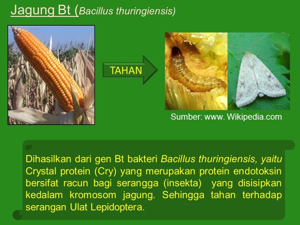 Dihasilkan dari gen Bt bakteri Bacillus thuringiensis, yaitu Crystal protein (Cry) yang merupakan protein endotoksin bersifat racun bagi serangga (ins