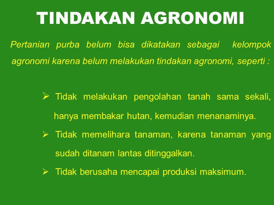 TINDAKAN AGRONOMI Pertanian purba belum bisa dikatakan sebagai kelompok agronomi karena belum melakukan tindakan agronomi, seperti :  Tidak melakukan pengolahan tanah sama sekali, hanya membakar hutan, kemudian menanaminya.