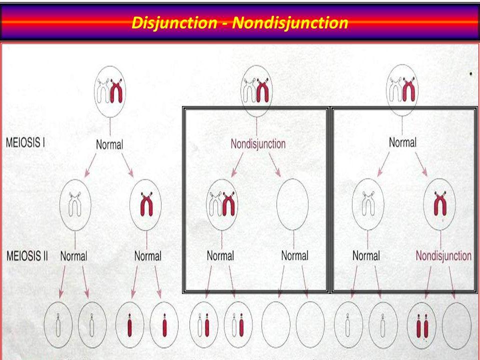 Disjunction - Nondisjunction
