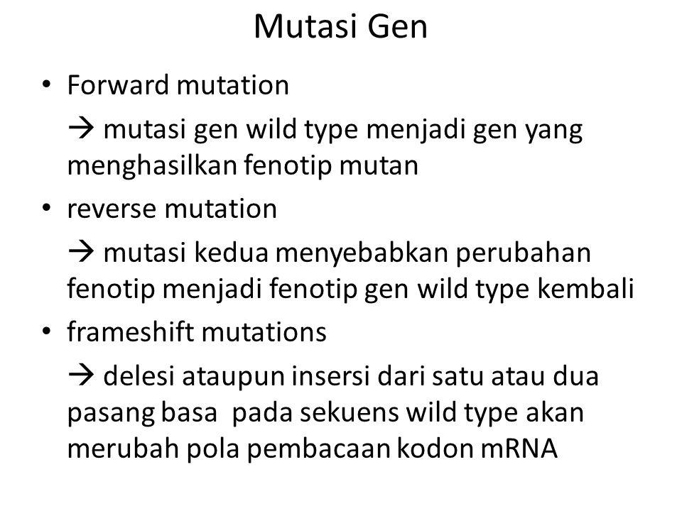 Mutasi Gen Forward mutation  mutasi gen wild type menjadi gen yang menghasilkan fenotip mutan reverse mutation  mutasi kedua menyebabkan perubahan f