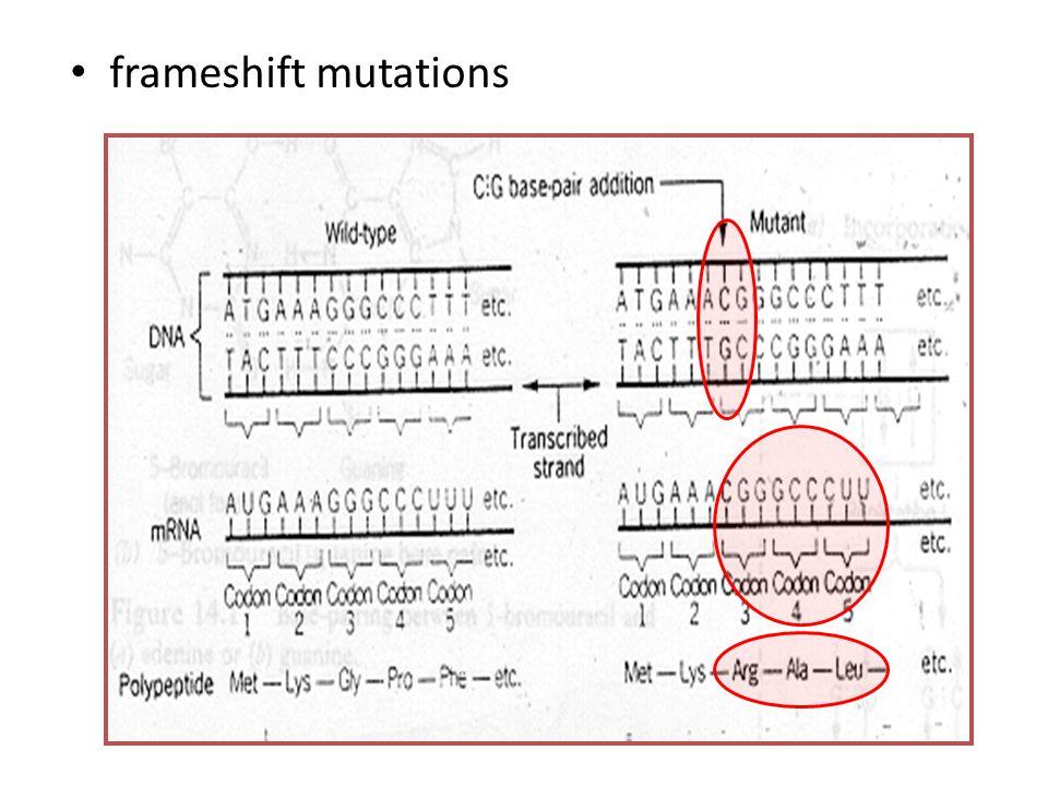 Mutasi Gen missense mutation  mutasi yang menyebabkan perubahan sekuens basa nukleotida yang diikuti dengan perubahan sekuens asam amino dari protein.