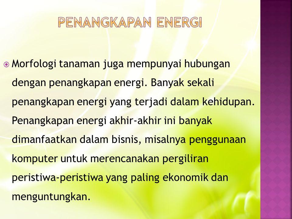  Morfologi tanaman juga mempunyai hubungan dengan penangkapan energi.