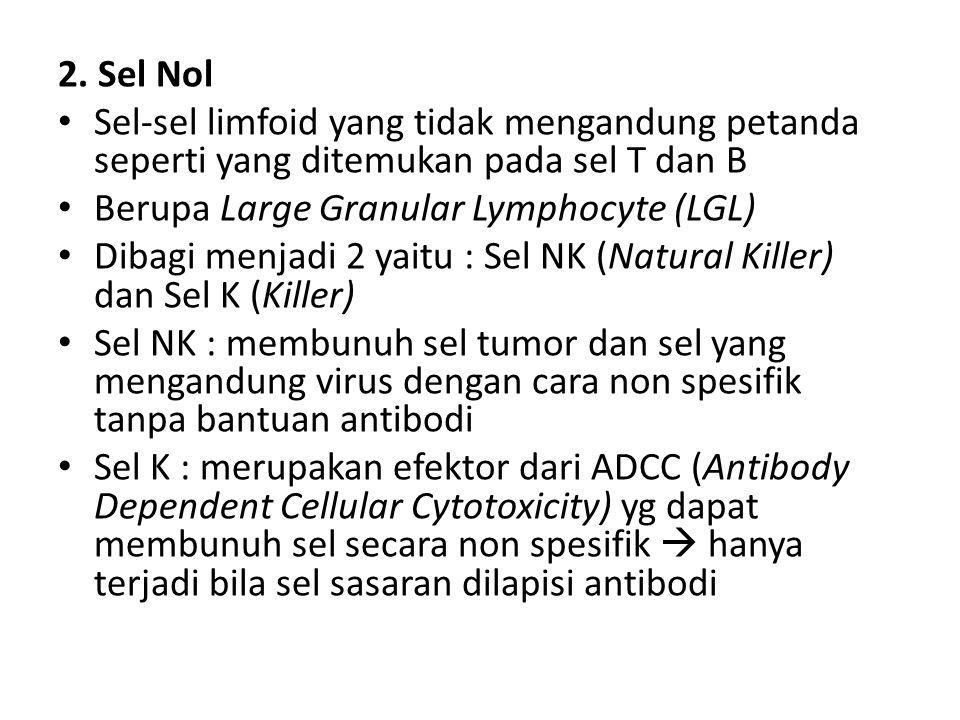2. Sel Nol Sel-sel limfoid yang tidak mengandung petanda seperti yang ditemukan pada sel T dan B Berupa Large Granular Lymphocyte (LGL) Dibagi menjadi