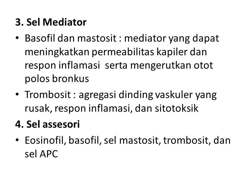 3. Sel Mediator Basofil dan mastosit : mediator yang dapat meningkatkan permeabilitas kapiler dan respon inflamasi serta mengerutkan otot polos bronku