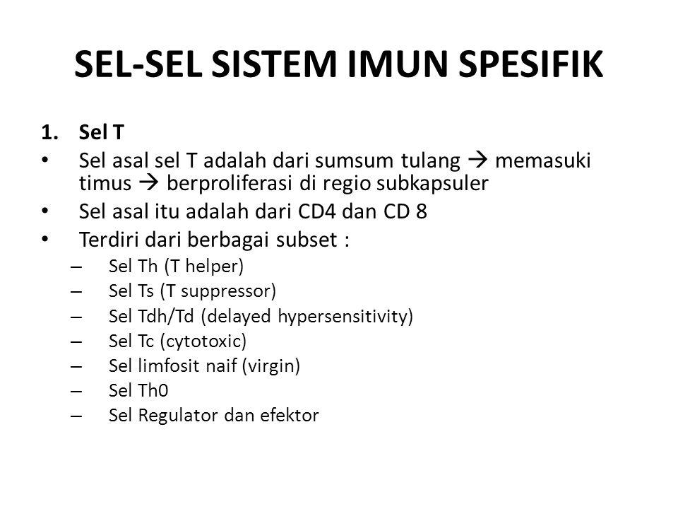 SEL-SEL SISTEM IMUN SPESIFIK 1.Sel T Sel asal sel T adalah dari sumsum tulang  memasuki timus  berproliferasi di regio subkapsuler Sel asal itu adalah dari CD4 dan CD 8 Terdiri dari berbagai subset : – Sel Th (T helper) – Sel Ts (T suppressor) – Sel Tdh/Td (delayed hypersensitivity) – Sel Tc (cytotoxic) – Sel limfosit naif (virgin) – Sel Th0 – Sel Regulator dan efektor