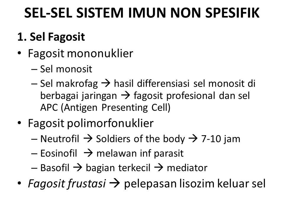 SEL-SEL SISTEM IMUN NON SPESIFIK 1. Sel Fagosit Fagosit mononuklier – Sel monosit – Sel makrofag  hasil differensiasi sel monosit di berbagai jaringa