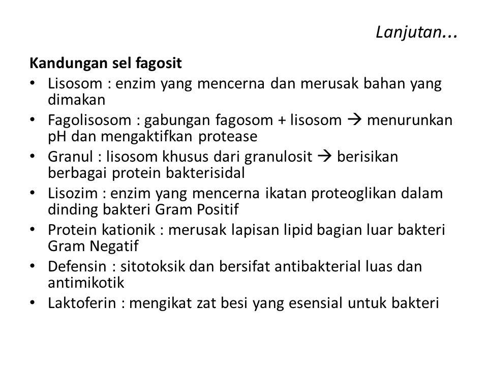 Lanjutan... Kandungan sel fagosit Lisosom : enzim yang mencerna dan merusak bahan yang dimakan Fagolisosom : gabungan fagosom + lisosom  menurunkan p