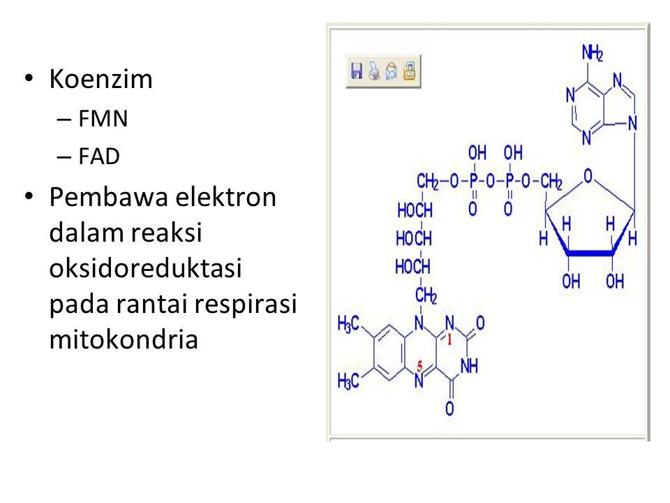 Koenzim – FMN – FAD Pembawa elektron dalam reaksi oksidoreduktasi pada rantai respirasi mitokondria