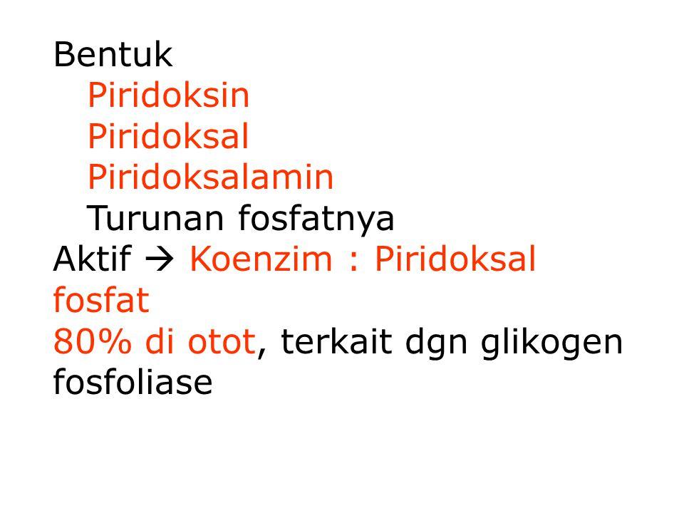 Bentuk Piridoksin Piridoksal Piridoksalamin Turunan fosfatnya Aktif  Koenzim : Piridoksal fosfat 80% di otot, terkait dgn glikogen fosfoliase