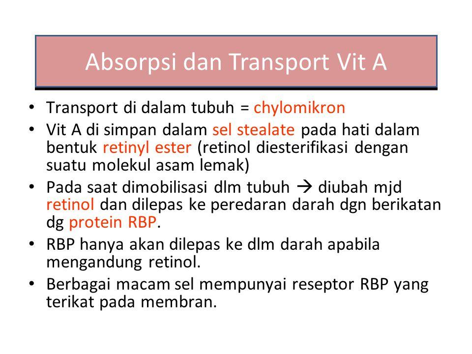 Absorpsi Dalam makanan terikat dengan protein Lambung: Protein terlepas – Diikat oleh kobalofilin Duodenum – Protease pankreas ; Hidrolisis kobalofilin – Diikat fakto instrinsik dari lambung – Diserap Transport : Transkobalamin