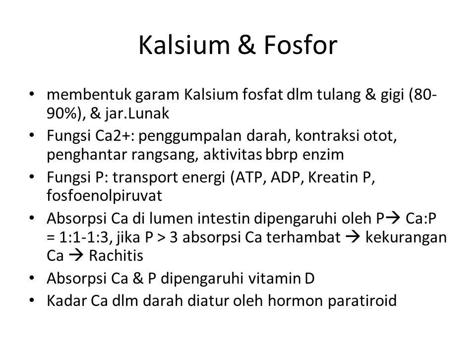 Kalsium & Fosfor membentuk garam Kalsium fosfat dlm tulang & gigi (80- 90%), & jar.Lunak Fungsi Ca2+: penggumpalan darah, kontraksi otot, penghantar rangsang, aktivitas bbrp enzim Fungsi P: transport energi (ATP, ADP, Kreatin P, fosfoenolpiruvat Absorpsi Ca di lumen intestin dipengaruhi oleh P  Ca:P = 1:1-1:3, jika P > 3 absorpsi Ca terhambat  kekurangan Ca  Rachitis Absorpsi Ca & P dipengaruhi vitamin D Kadar Ca dlm darah diatur oleh hormon paratiroid