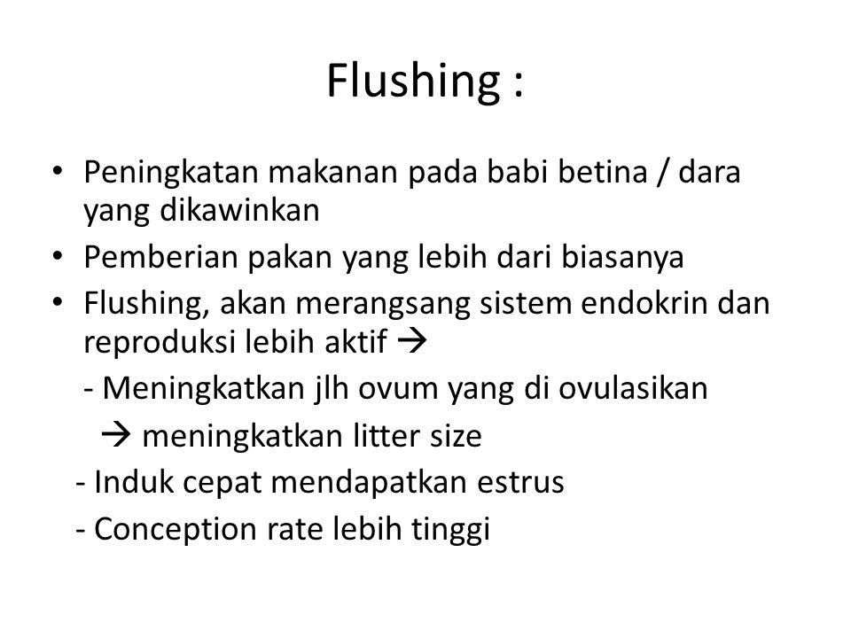 Flushing : Peningkatan makanan pada babi betina / dara yang dikawinkan Pemberian pakan yang lebih dari biasanya Flushing, akan merangsang sistem endok