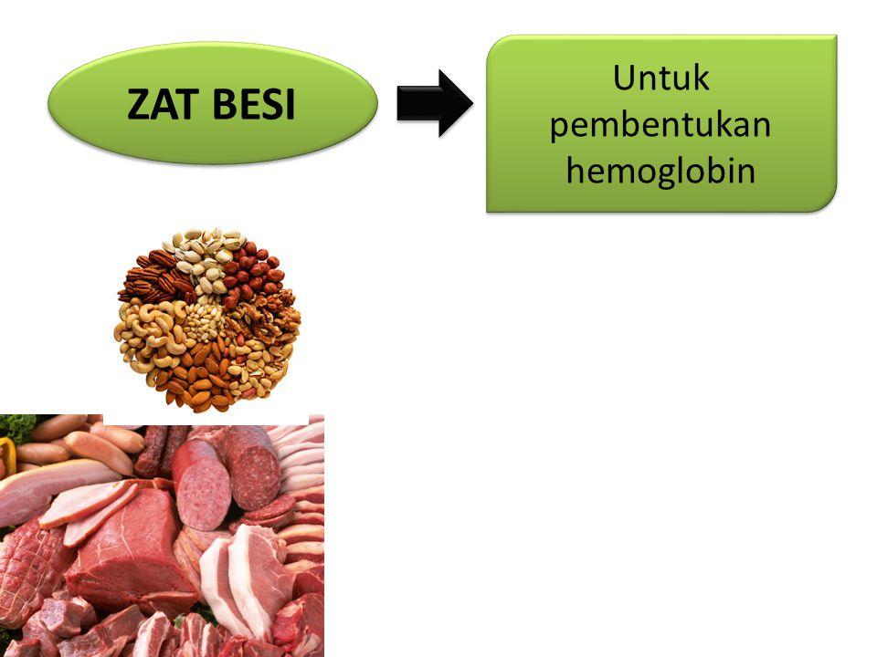 ZAT BESI Untuk pembentukan hemoglobin