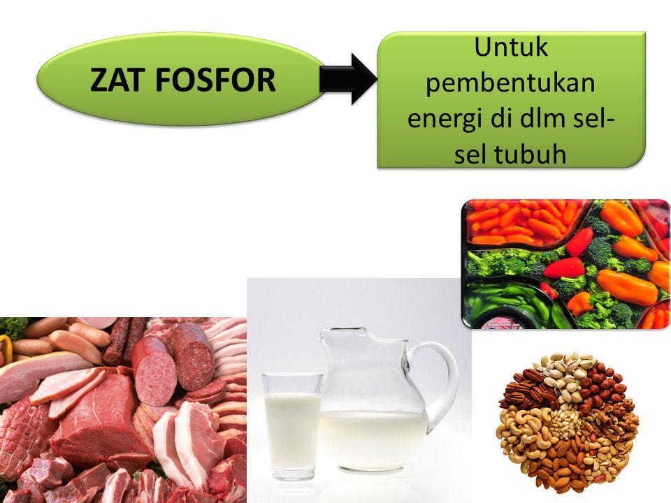 ZAT FOSFOR Untuk pembentukan energi di dlm sel- sel tubuh