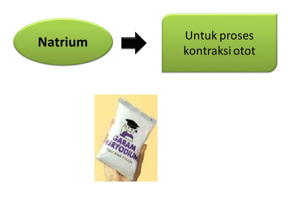 Natrium Untuk proses kontraksi otot