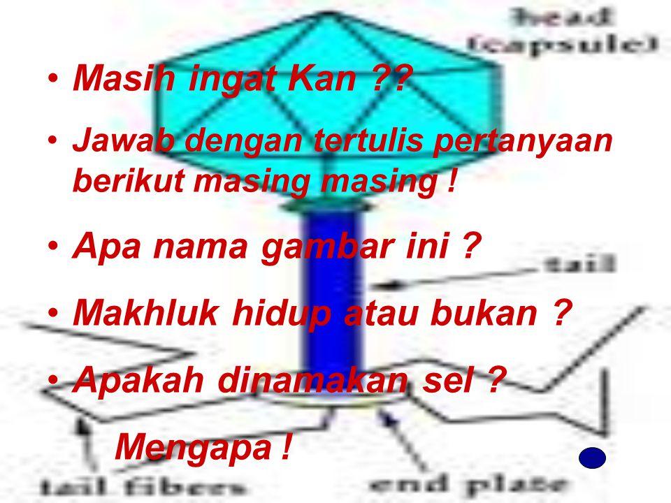 Masih ingat Kan ?.Jawab dengan tertulis pertanyaan berikut masing masing .
