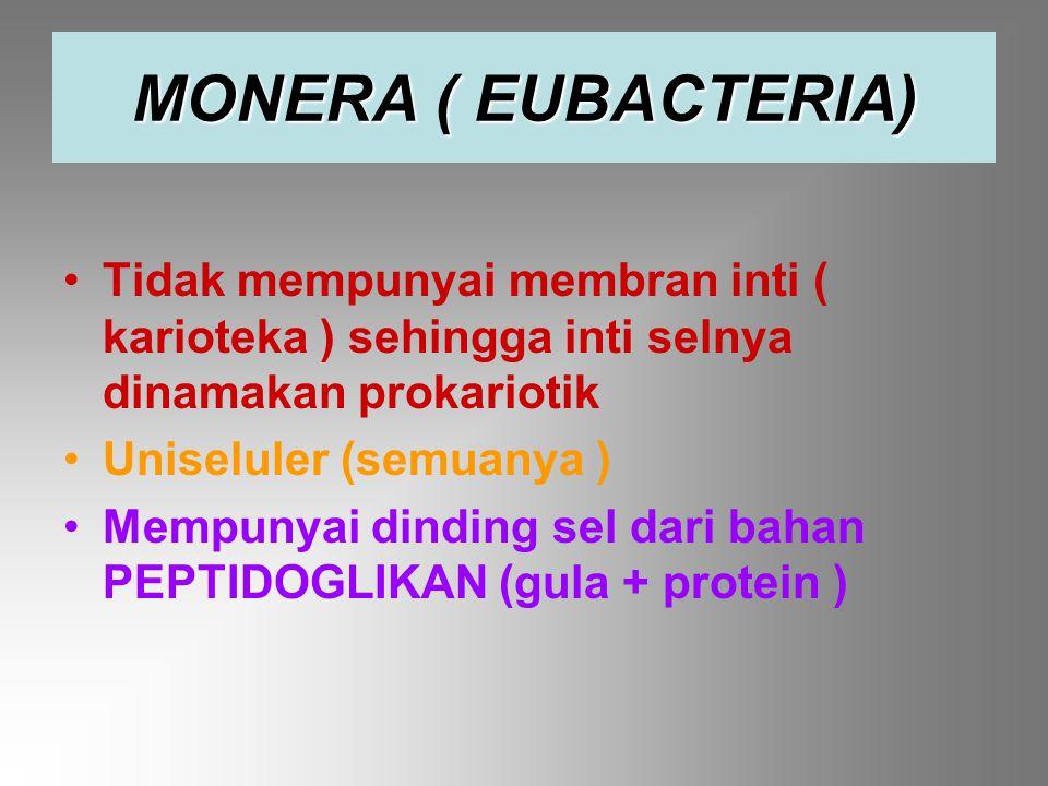 Tidak mempunyai membran inti ( karioteka ) sehingga inti selnya dinamakan prokariotik Uniseluler (semuanya ) Mempunyai dinding sel dari bahan PEPTIDOGLIKAN (gula + protein ) MONERA ( EUBACTERIA)
