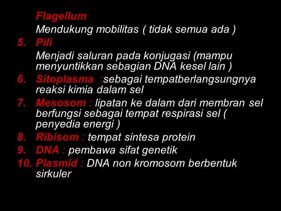 4.Flagellum Mendukung mobilitas ( tidak semua ada ) 5.Pili Menjadi saluran pada konjugasi (mampu menyuntikkan sebagian DNA kesel lain ) 6.Sitoplasma :sebagai tempatberlangsungnya reaksi kimia dalam sel 7.Mesosom : lipatan ke dalam dari membran sel berfungsi sebagai tempat respirasi sel ( penyedia energi ) 8.Ribisom : tempat sintesa protein 9.DNA : pembawa sifat genetik 10.Plasmid : DNA non kromosom berbentuk sirkuler