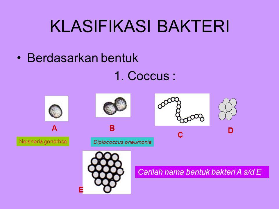 KLASIFIKASI BAKTERI Berdasarkan bentuk 1.