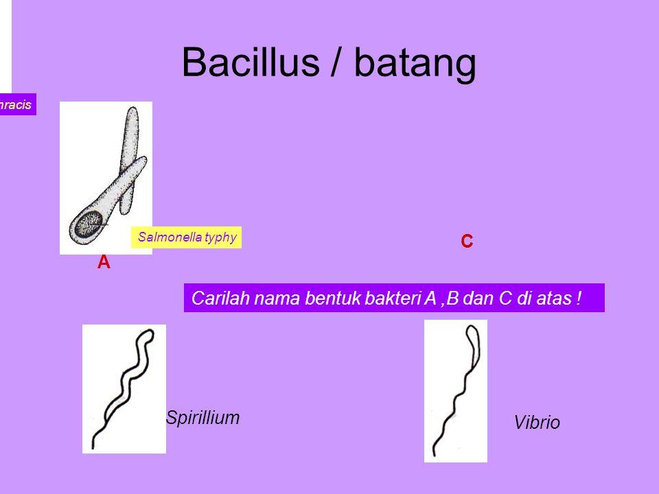 Bacillus / batang B C Spirillium Vibrio Carilah nama bentuk bakteri A,B dan C di atas .
