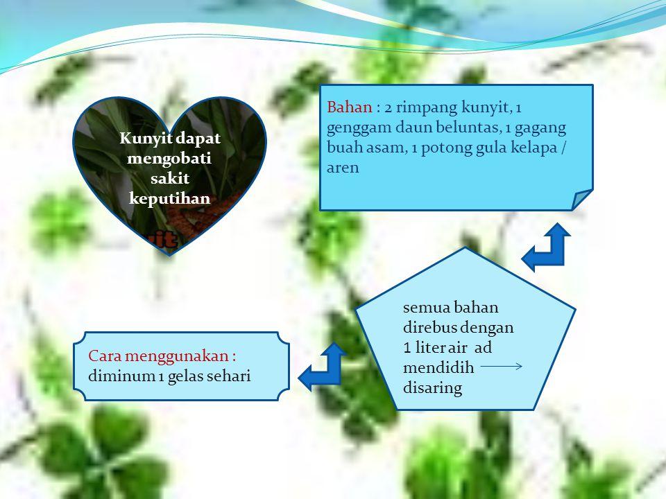 Kunyit dapat mengobati sakit keputihan Bahan : 2 rimpang kunyit, 1 genggam daun beluntas, 1 gagang buah asam, 1 potong gula kelapa / aren semua bahan