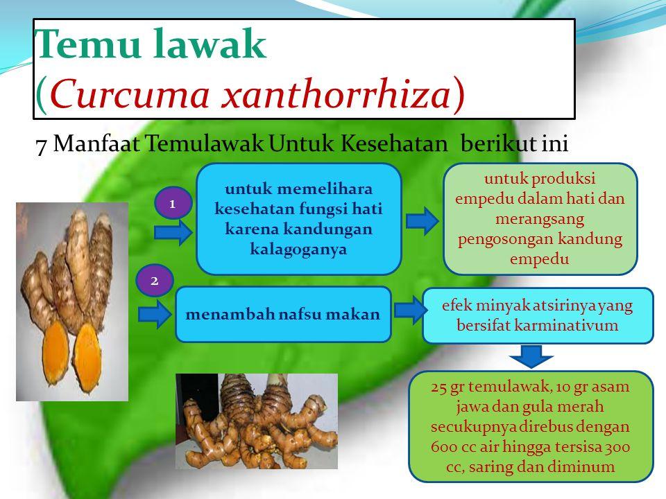 Temu lawak (Curcuma xanthorrhiza) 7 Manfaat Temulawak Untuk Kesehatan berikut ini untuk memelihara kesehatan fungsi hati karena kandungan kalagoganya