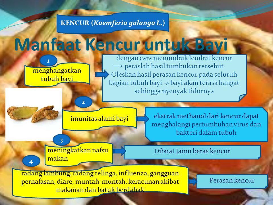 Manfaat Kencur untuk Bayi KENCUR (Kaemferia galanga L.) menghangatkan tubuh bayi imunitas alami bayi meningkatkan nafsu makan dengan cara menumbuk lem